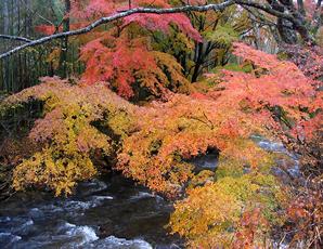 花園渓谷 紅葉スポット