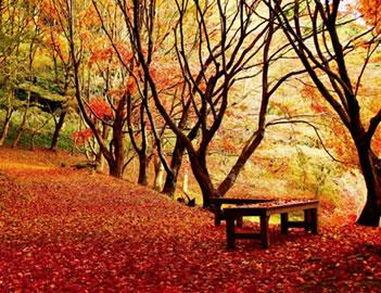 秋月城跡周辺 紅葉スポット
